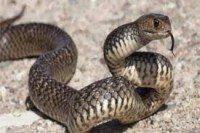 مكافحة ثعابين بالرياض