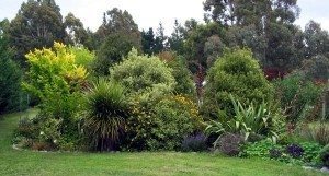 شركة بيع اشجار بالرياض شركة تنسيق حدائق شركة تنسيق حدائق وبيع أشجار بالرياض 0594724750 middle garden summer