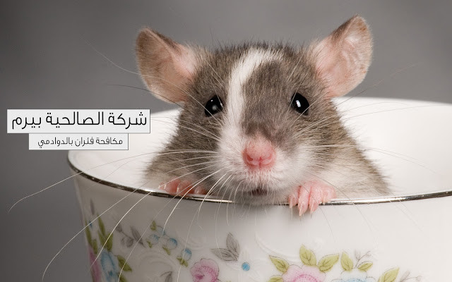 Photo of شركة مكافحة فئران بالدوادمي 920008956
