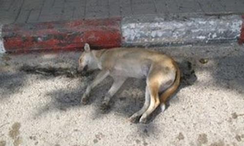 رعاية الكلاب شركة مكافحة كلاب بالرياض 0503152005