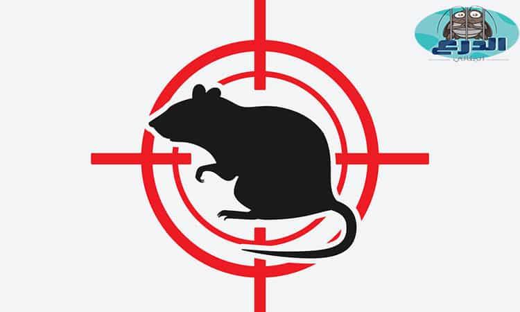 مكافحة الفئران بالقصيم
