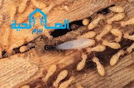 Photo of شركة مكافحة النمل الابيض بالزلفى 920008956