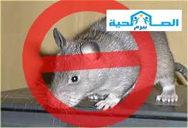 شركة مكافحة الفئران بالقصيم 0533942977