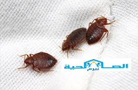 Photo of شركة مكافحة البق بالمذنب 0533942977