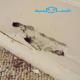 شركة مكافحة النمل الابيض فى رياض الخبراء