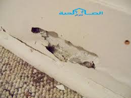 Photo of شركة مكافحة النمل الابيض فى رياض الخبراء 920008956