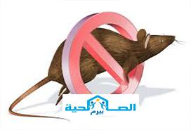 شركة مكافحة الفئران بالمذنب