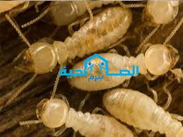 شركة مكافحة النمل الابيض بالقصيم 0533942977