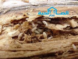 شركة مكافحة النمل الابيض بالمذنب