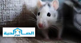 شركة مكافحة الفئران بالرس