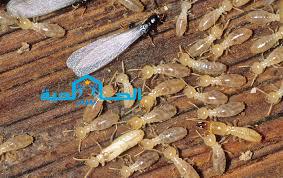 شركة مكافحة النمل الابيض بالبكيرية