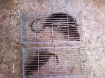 شركة مكافحة الفئران فى رياض الخبراء