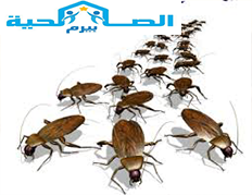 Photo of شركة مكافحة الصراصير بالزلفى 0533942977