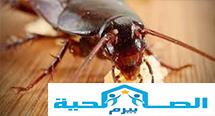 شركة مكافحة الصراصير فى رياض الخبراء 0533942977