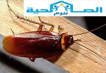 Photo of شركة مكافحة الصراصير بالمذنب 0533942977