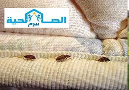 Photo of شركة مكافحة البق بالرس 0533942977