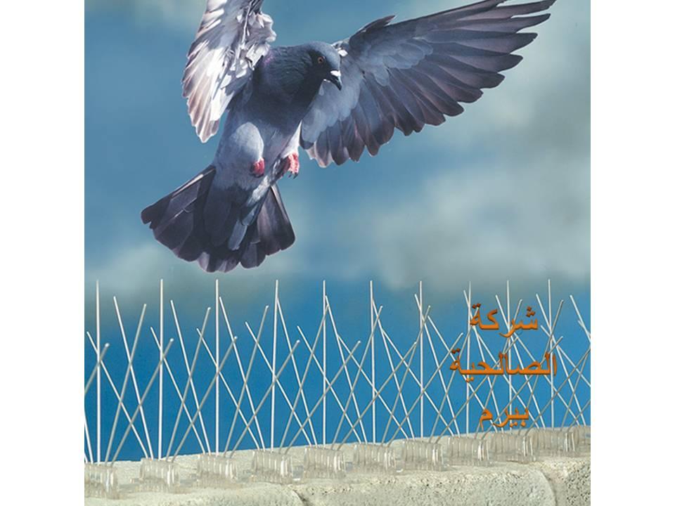 Photo of شركة مكافحة الحمام بالزلفي 0533942977