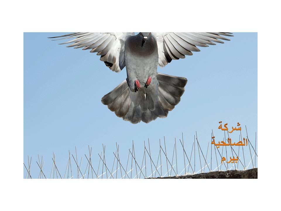 Photo of شركة مكافحة الحمام بالبكيرية 0533942977