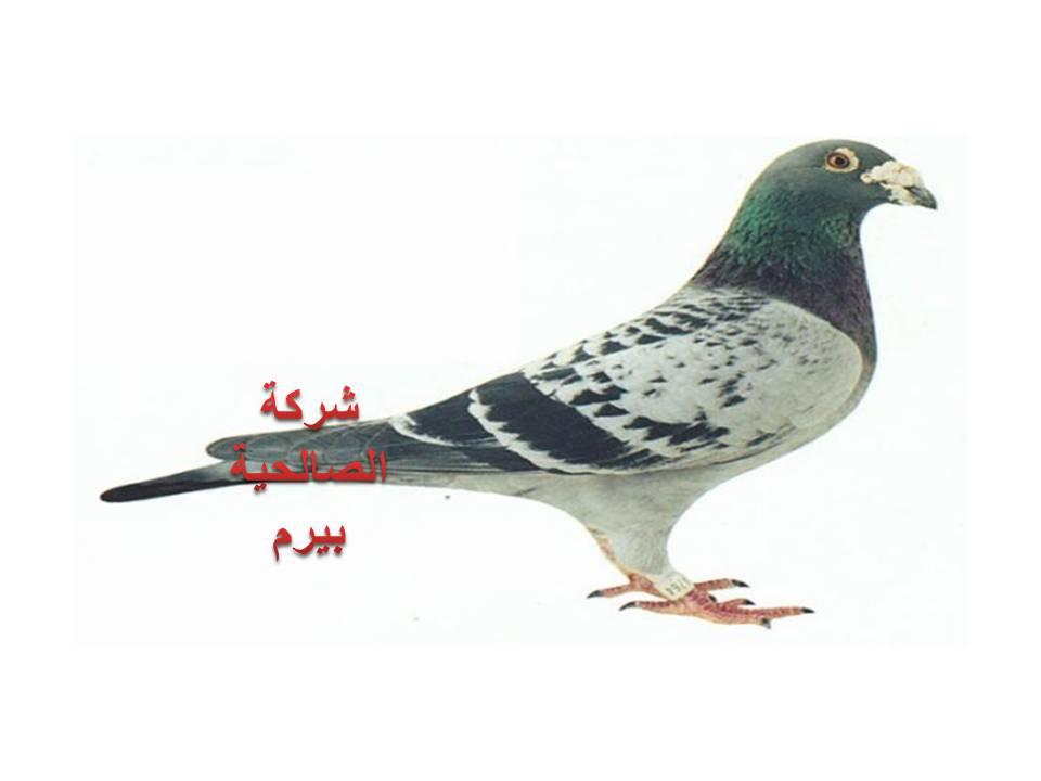 Photo of شركة مكافحة الحمام بالمذنب 0533942977