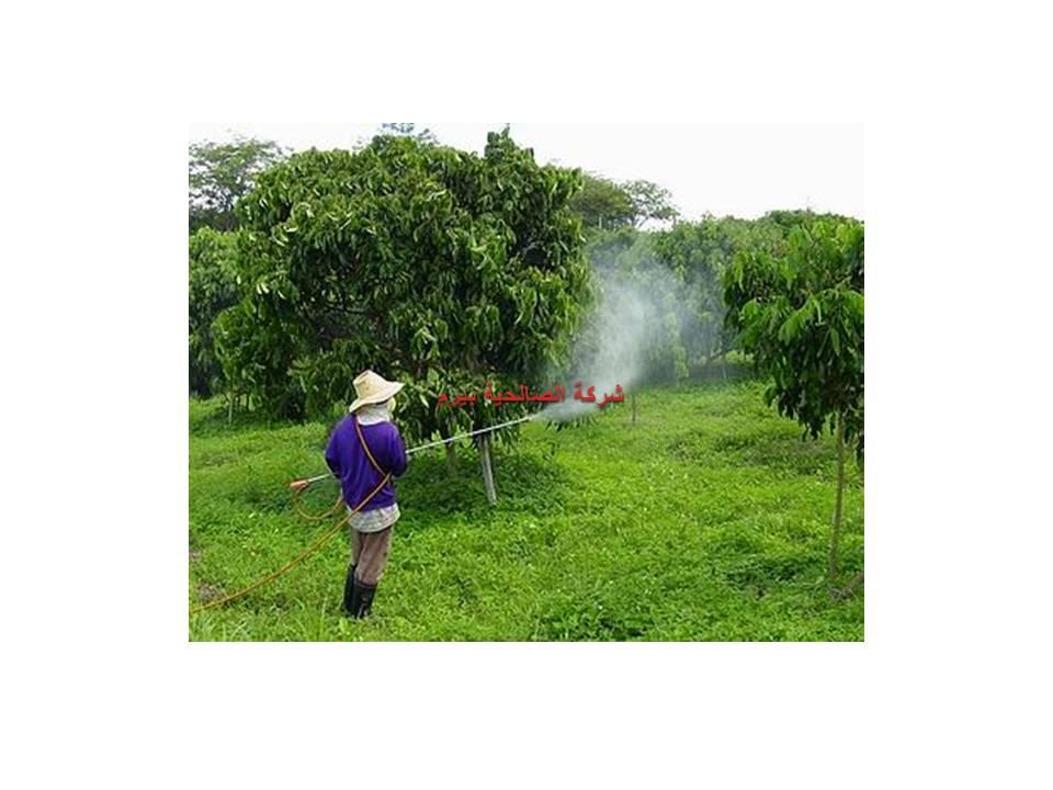 شركة رش مبيدات بالبدائع