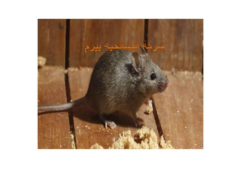 Photo of شركة مكافحة الفئران بالبدائع 0533942977