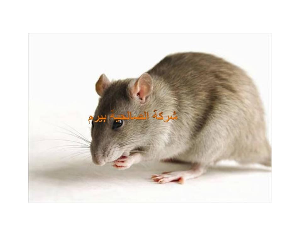 شركة مكافحة الفئران بالبدائع