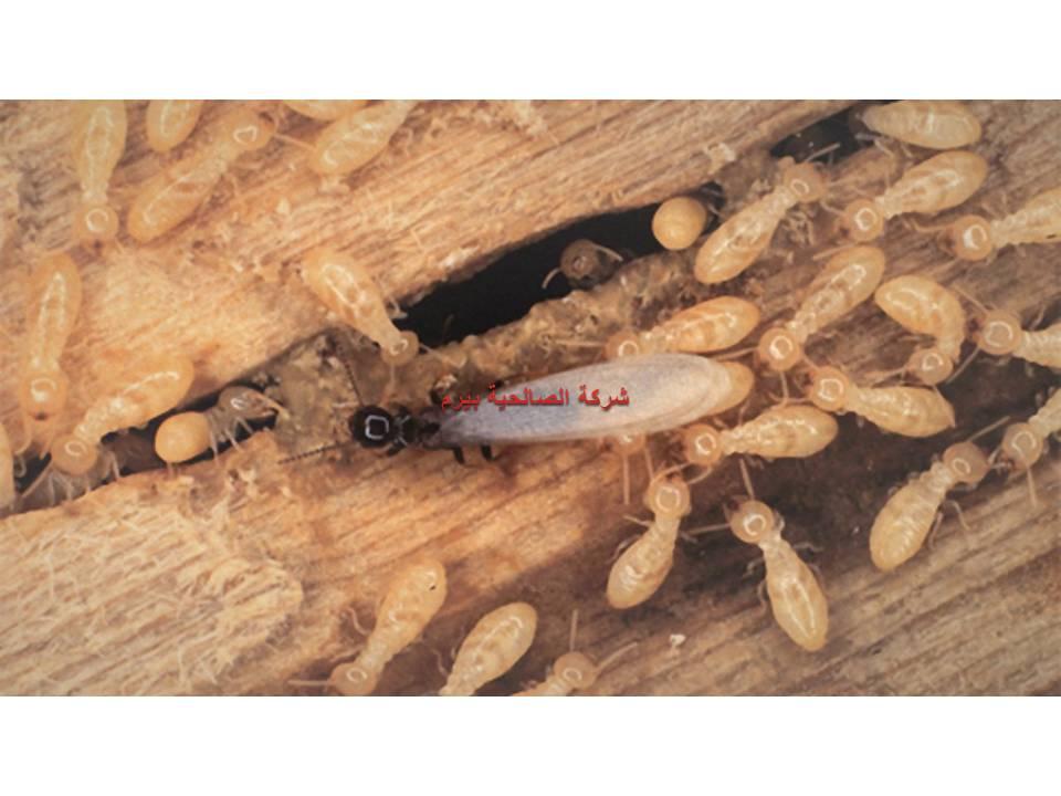 شركة مكافحة النمل الابيض بالبدائع